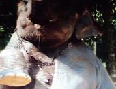 Жаль,что слон находился от нас далеко.....Было бы еще лучше...Но улыбка все равно видна!Хорошоее настроение бывает не только у людей)