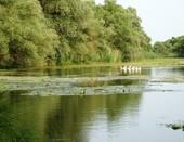 летом на речке