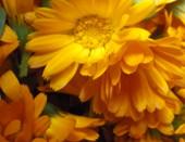 солнеччные цветы