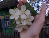 Цветы....