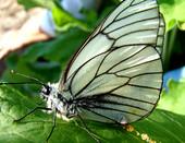 Бабочка искала себе дом- цветок