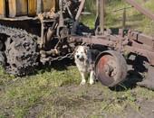 Пёс охраняет трактор