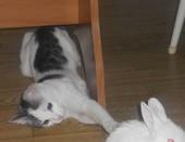 Кошки-кролики