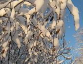Зима...это ли не чудо?!