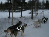 Поездка на собачьей упряжке