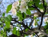 Весна цветёт