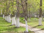 Весенний школьный парк