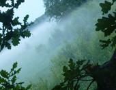 весенней туман