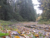 лес, дорога, лужи....