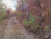 Дорога, осень