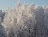 Кольская зима