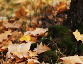 Осень__