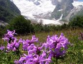Альпийский луг