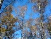 Осениий лес