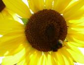 А насекомые опередили людей - они уже побывали на солнце