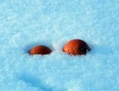 Апельсины на снегу