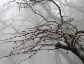 жемчуг в тумане