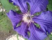 цветочек...