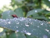 Капли после дождя...