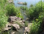 Река.Природа.Красота.