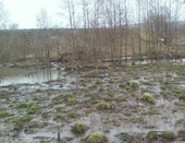 Место обитания бобров